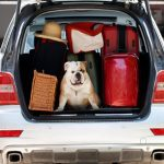 How to secure your trunk when traveling with a dog?