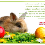 Wesołych pogodnych oraz bezpiecznych Świąt Wielkiej Nocy wszystkim użytkownikom życzy zespół Avisa Auto Accessories.